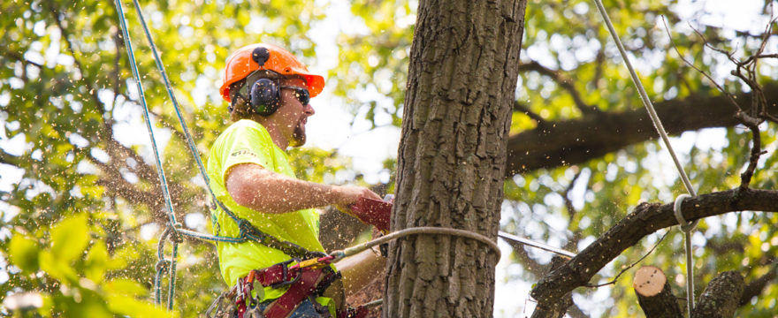 The Advantages of Hiring Tree Services For Your Home