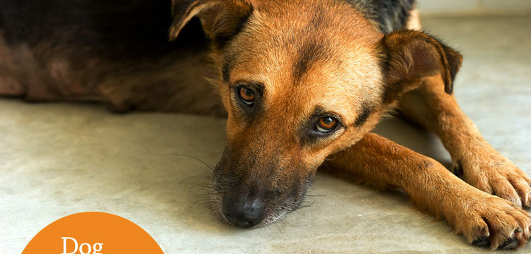 Is your dog stressed? Tips for keeping your canine calm