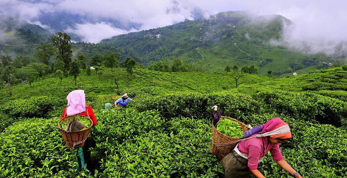 Munnar in the Monsoons: Heaven on Earth