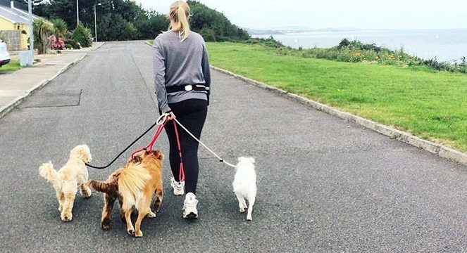 What to Watch Out for When Offering Dog Walking Services