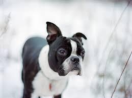 4 Happy Dog Breeds