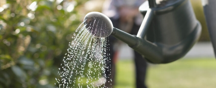 Top tips for preparing your garden for a sociable summer