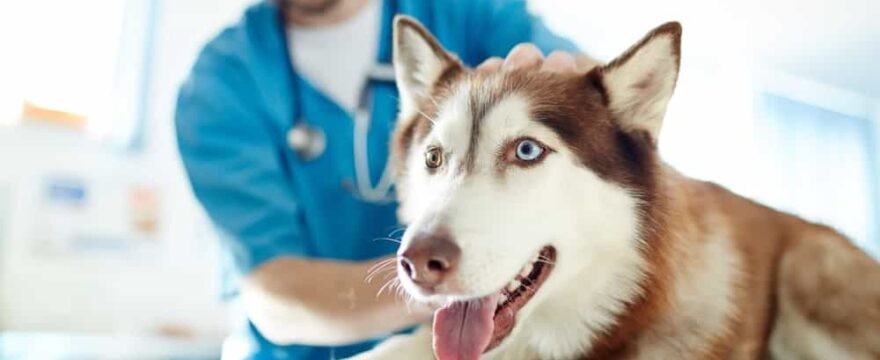 Who Is Liable When a Pet Bites a Vet?